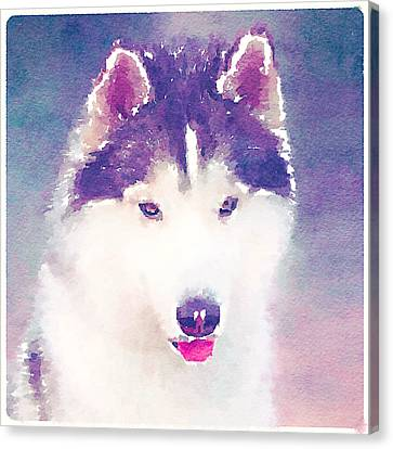 Husky Dog 2 Canvas Print by Yury Malkov
