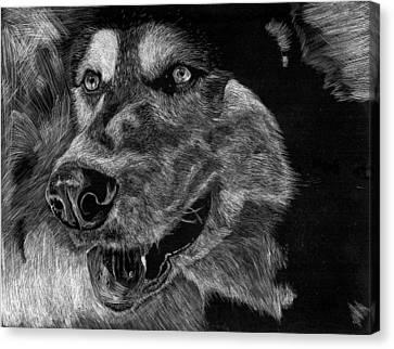 Husky Canvas Print by Lauren Alexandra