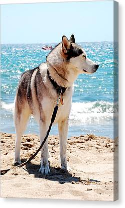 Husky Canvas Print - Husky On The Beach by Gina Dsgn
