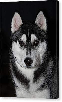 Husky Portrait Canvas Print