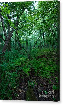 Huth Ravine Canvas Print by Andrew Slater