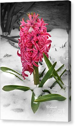 Hyacinth In The Snow Canvas Print by E B Schmidt