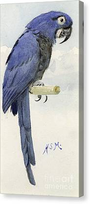 Hyacinth Macaw Canvas Print by Henry Stacey Marks