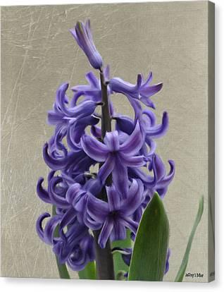 Hyacinth Canvas Print - Hyacinth Purple by Jeffrey Kolker