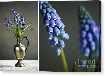Hyacinth Still Life Canvas Print by Nailia Schwarz