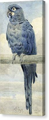 Hyacinthine Macaw Canvas Print by Henry Stacey Marks