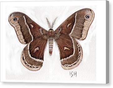 Hyalophora Cecropia/gloveri Hybrid Moth Canvas Print
