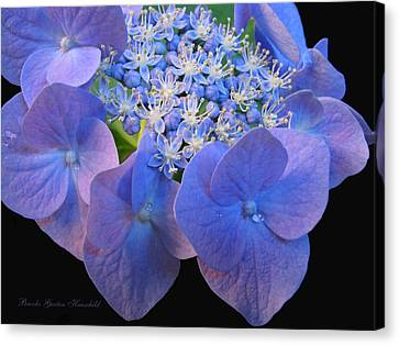 Hydrangea Blossom Macro Canvas Print by Brooks Garten Hauschild