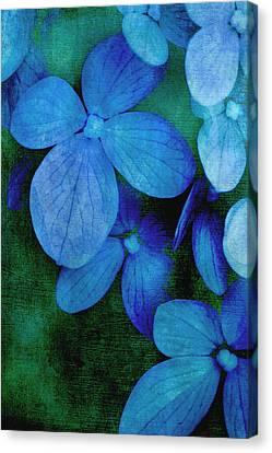 Hydrangea Blues Canvas Print by Christine Annas