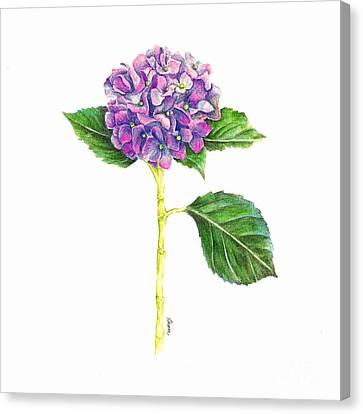 Hydrangea Canvas Print by Dion Dior