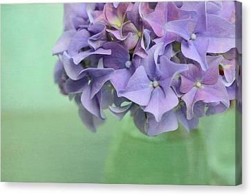 Hydrangea Still Life Canvas Print by Cora Niele