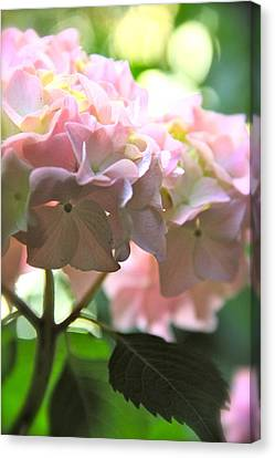 Hydrangea Canvas Print by Tracy Male
