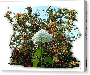 Hydrangea With Mountain Ash Canvas Print by Will Borden