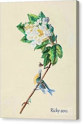 Hydrangea With Yellow Breasted  Vireo After Audubon Canvas Print