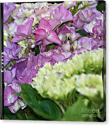 Canvas Print featuring the photograph Hydrangeas by Leslie Hunziker