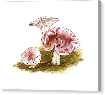 Hygrophorus Russula Mushrooms, Artwork Canvas Print by Science Photo Library