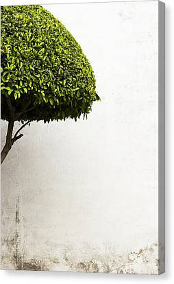 Hypnotic Tree Canvas Print