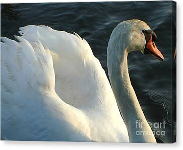 Canvas Print featuring the photograph I Am Thinking... by Katy Mei