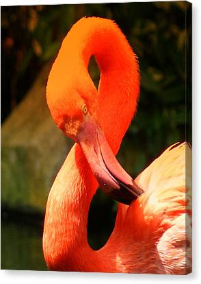 I Can Count To 8 - Flamingo Canvas Print by DerekTXFactor Creative