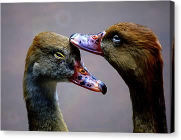 I Crown You Ducklet Canvas Print by DerekTXFactor Creative