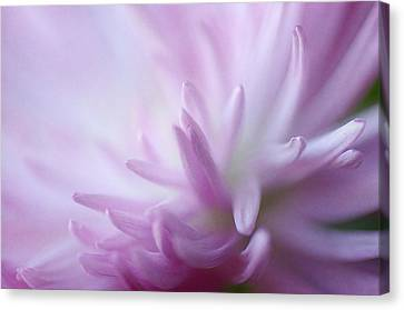 I Dream Of Dahlia Canvas Print by Fraida Gutovich