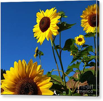 I Girasoli Dietro Casa Mia - Sunflowers In The Field Behind My House. Canvas Print