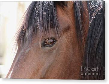 I Have My Eye On You Canvas Print by Fiona Kennard