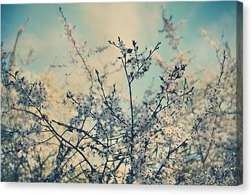 I Hope Spring Will Be Kind Canvas Print by Laurie Search