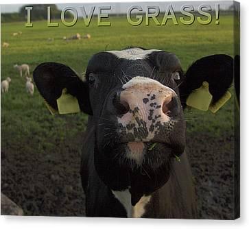 I Love Grass --said The Cow. Canvas Print