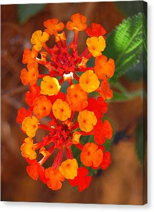 Canvas Print featuring the photograph I Love Orange by Lew Davis
