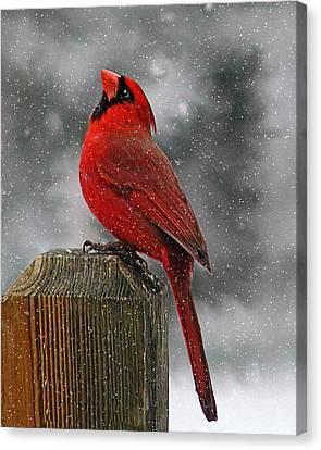 I Love Snow..... Canvas Print