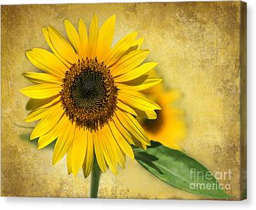 Florida Flowers Canvas Print - I Love Sunflowers by Sabrina L Ryan