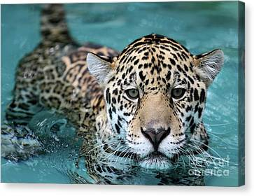 I Love The Water Canvas Print