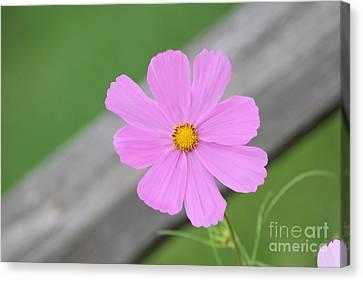 I Love You Flower Canvas Print