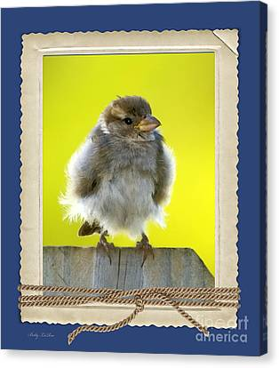 I Miss My Nest Canvas Print by Betty LaRue