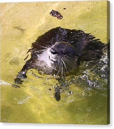 I Otter Smile Canvas Print by Chuck  Hicks