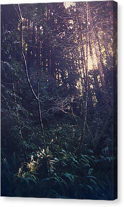 Tree Fern Canvas Print - I Realize by Laurie Search
