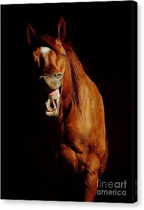Horse Whisperer Canvas Print by Robert Frederick