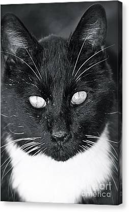 Canvas Print featuring the photograph I See You by Barbara Dudley