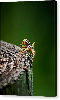 I See You Canvas Print by Swift Family