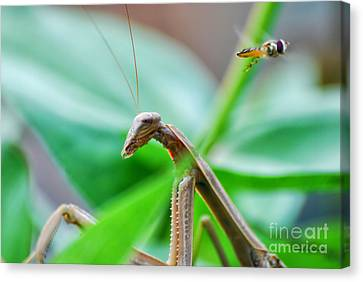 Canvas Print featuring the photograph I See You by Thomas Woolworth