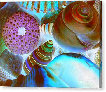 Canvas Print featuring the photograph I Sell Seashells Down By The Seashore by Janice Westerberg