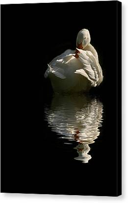 I Want To Be A Beautiful Swan Canvas Print by Regina  Williams