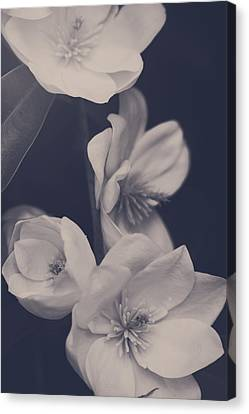 Tree Blossoms Canvas Print - I Was Always Your Flower by Laurie Search
