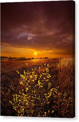 I Will See You Again Canvas Print by Phil Koch