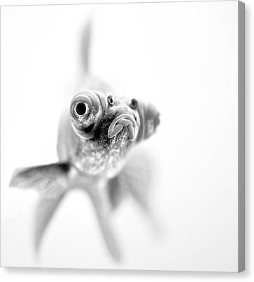 I'm Ready For My Close Up... Canvas Print by Paul