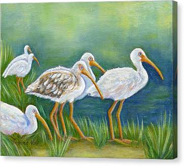 Ibis Flock With Juvenile Canvas Print by Jeanne Kay Juhos