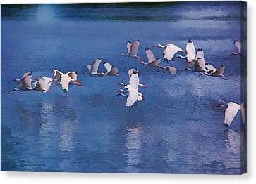 Canvas Print featuring the photograph Ibis In Flight by Pamela Blizzard