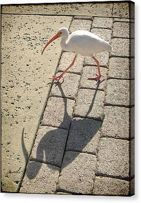 Ibis Canvas Print by The Art of Marsha Charlebois