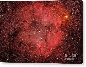 Ic 1396, The Elephant Trunk Nebula Canvas Print by Roberto Colombari